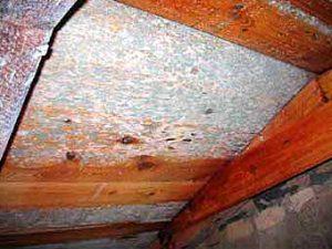 Schimmelpilzbefall an einer Dachschalung